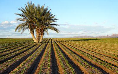La fertilización sostenible contra el cambio climático