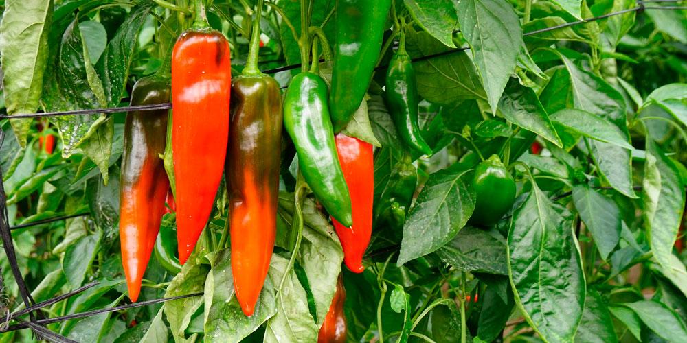 Fertilizantes ecológicos bajo la Norma UNE