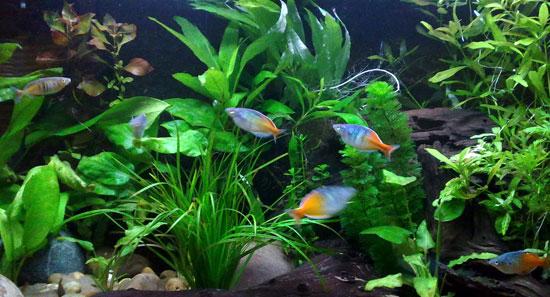 Jisa fertilizantes agr colas agronutrientes abonos for Todo para acuarios