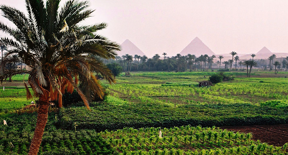 Green Apple For Agriculture Investment, JISA supplier in Egypt