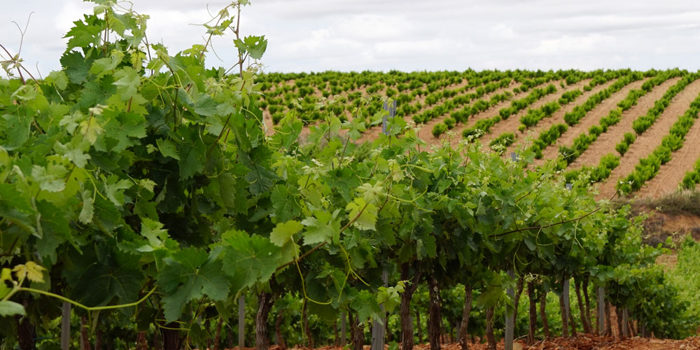 Bioestimulantes agrícolas en el Nuevo Reglamento Europeo de Fertilizantes