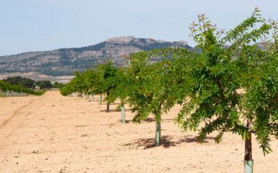 Manganeso agrícola