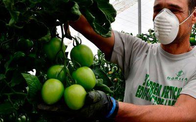 Donación de mascarillas para trabajadores del campo