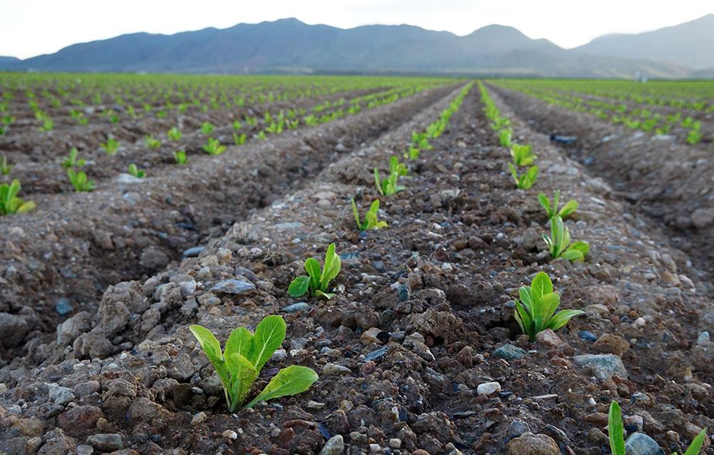 Microorganismos para la fertilización del suelo