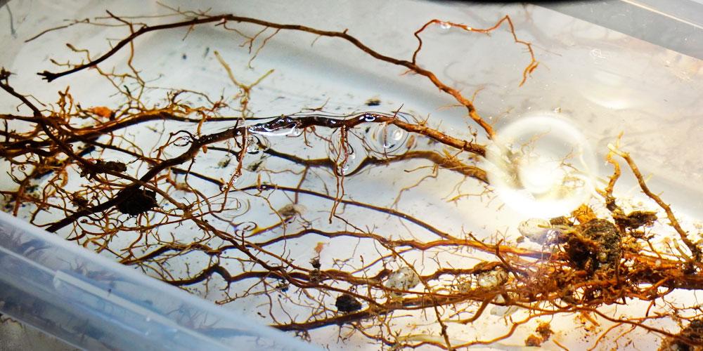 Biofertilizante para fortalecer el sistema vascular de las plantas
