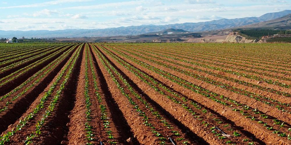 Regenerador biológico de suelos