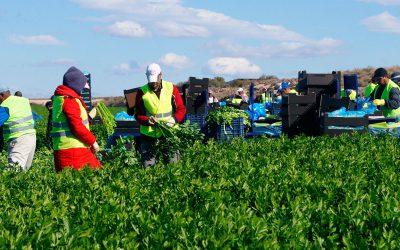 Reconocimiento de JISA al sector agrícola