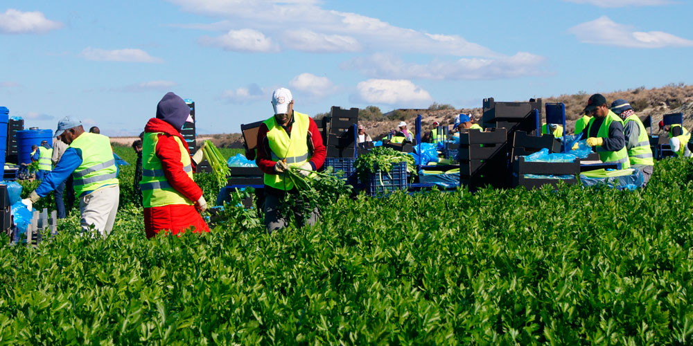 Sector de fertilizantes agrícola