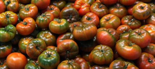 Cómo mejorar los frutos del tomate RAF